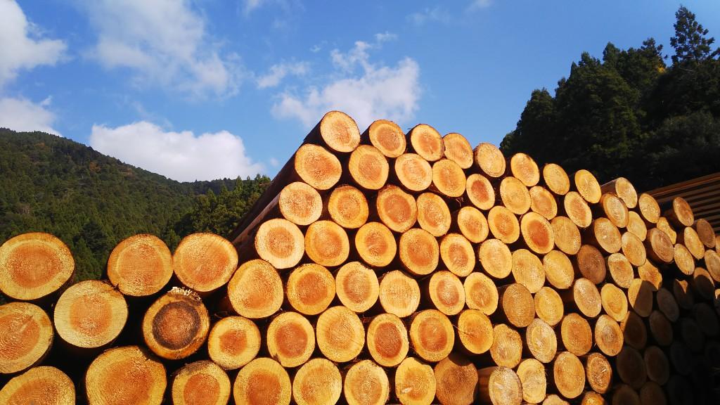 那賀高校森林クリエイト課 木材加工研修コーディネート