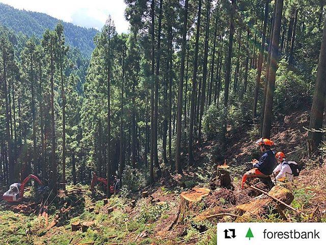 林業(集材)の様子/木育プログラム